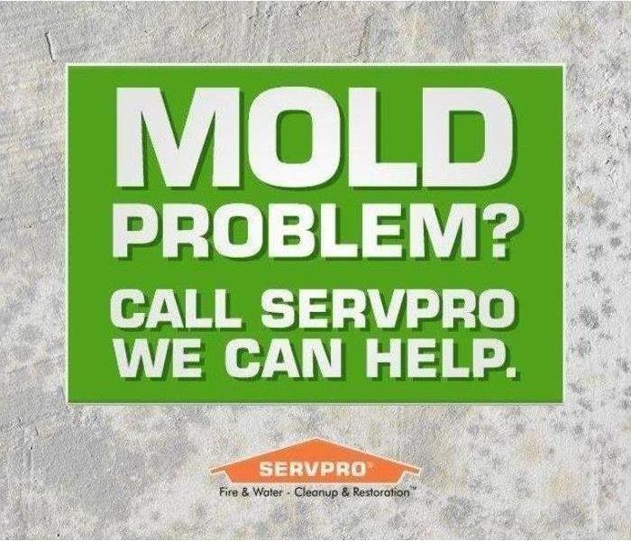 Mold Remediation What to do about a mold problem...