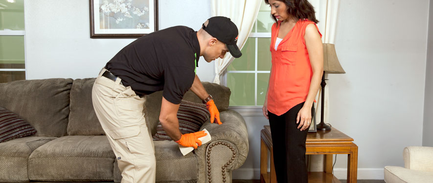 Livonia, MI carpet upholstery cleaning